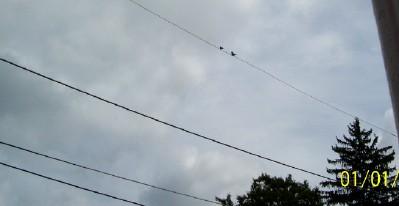 bird61.jpg