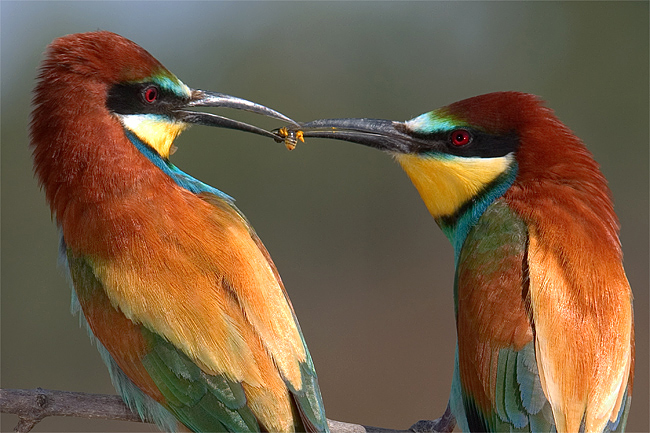 beautiful-bird2.jpg
